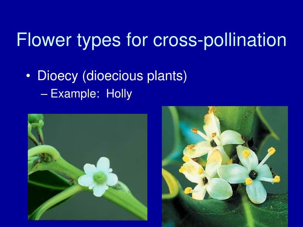 Flower types for cross-pollination