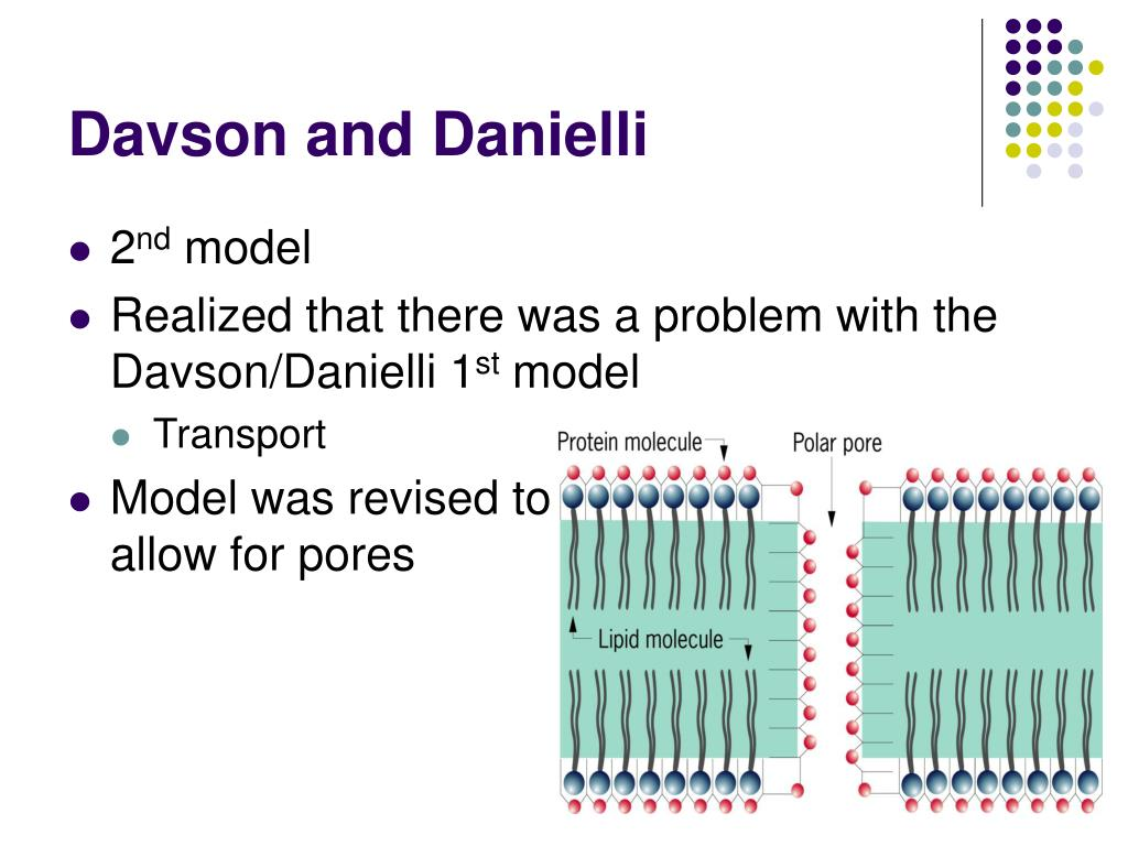 evidence for and against the davson danielli In 1935 davson and danielli proposed the  singer and nicolson proposed a membrane model that incorporated evidence about membrane  63 defense against .