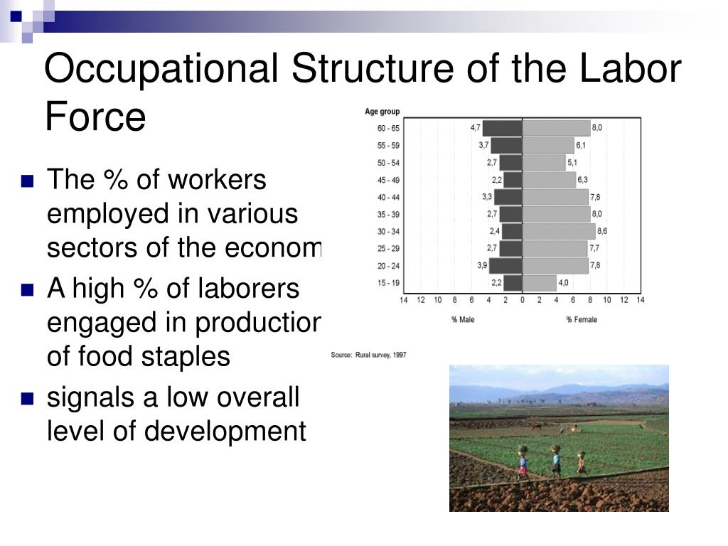 Occupational Structure of the Labor Force