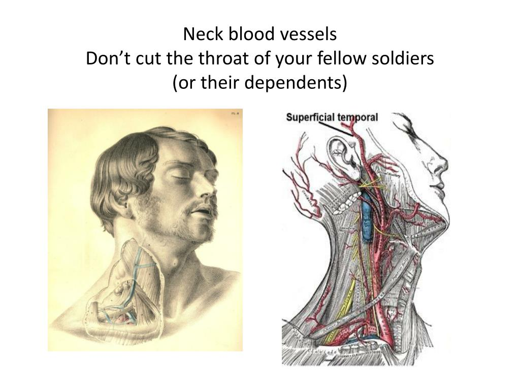 Neck blood vessels