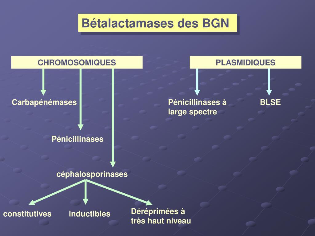 Bétalactamases des BGN