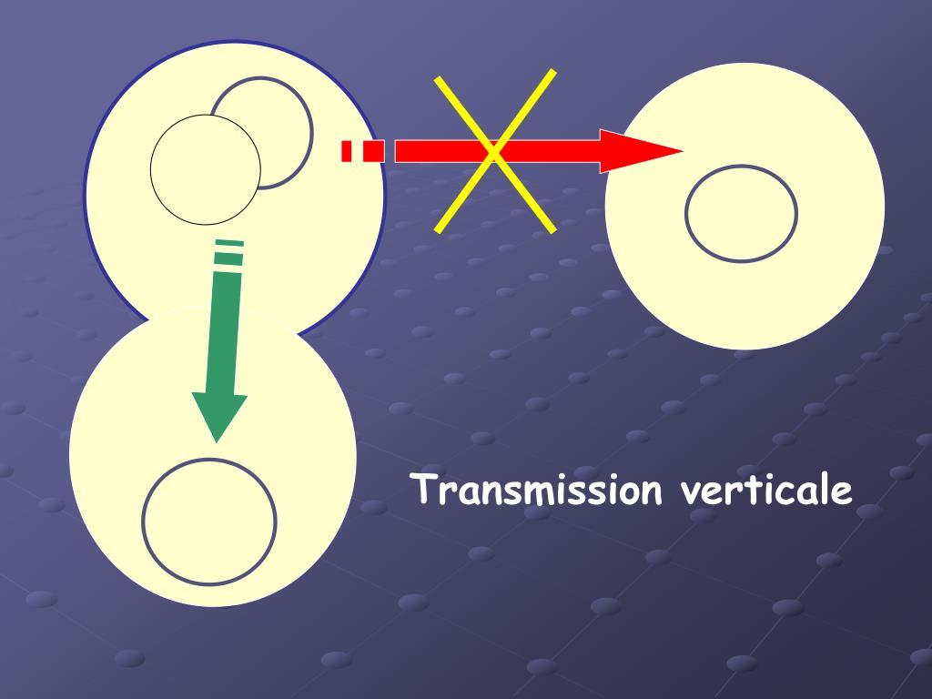 Transmission verticale