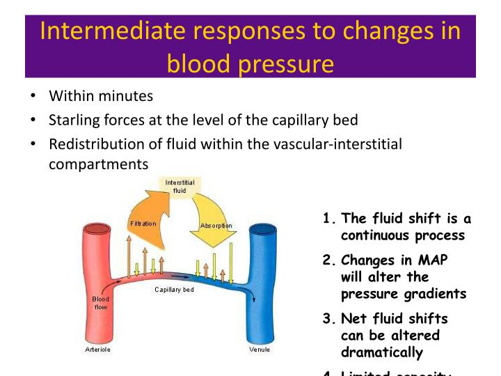 Long term regulation of blood pressure