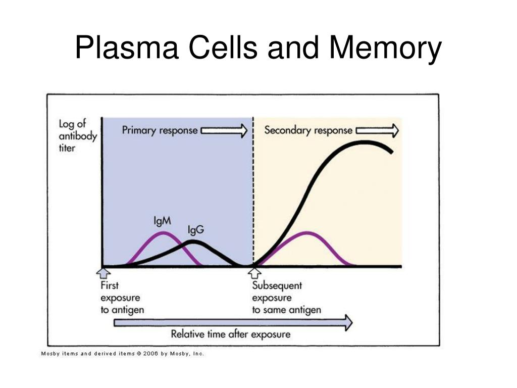 Plasma Cells and Memory