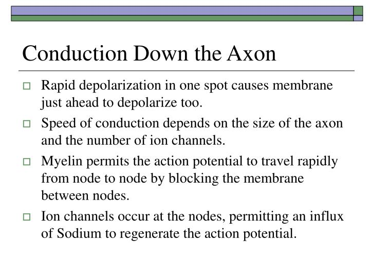 Conduction Down the Axon