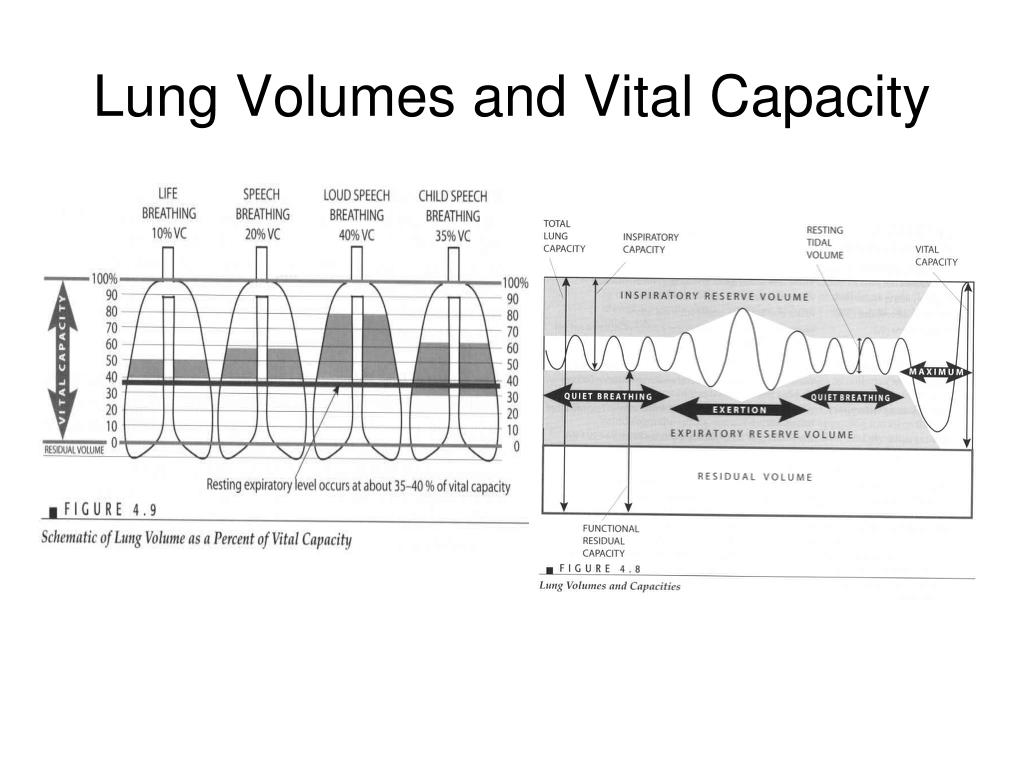 Lung Volumes and Vital Capacity