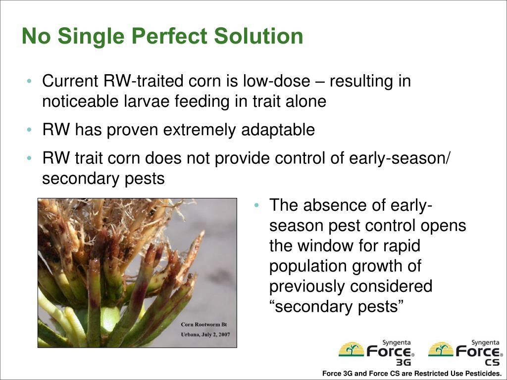 Current RW-traited corn is low-dose – resulting in noticeable larvae feeding in trait alone