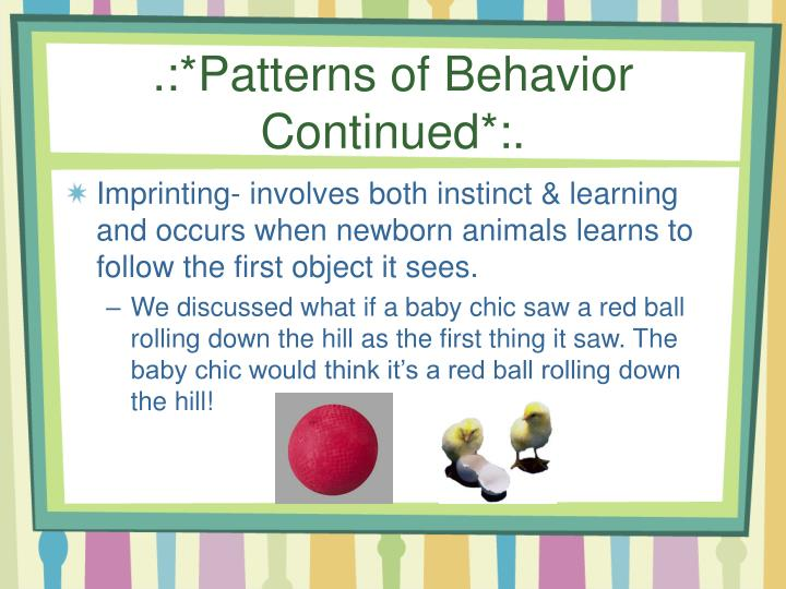 .:*Patterns of Behavior Continued*:.
