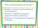 why do animals behave as they do