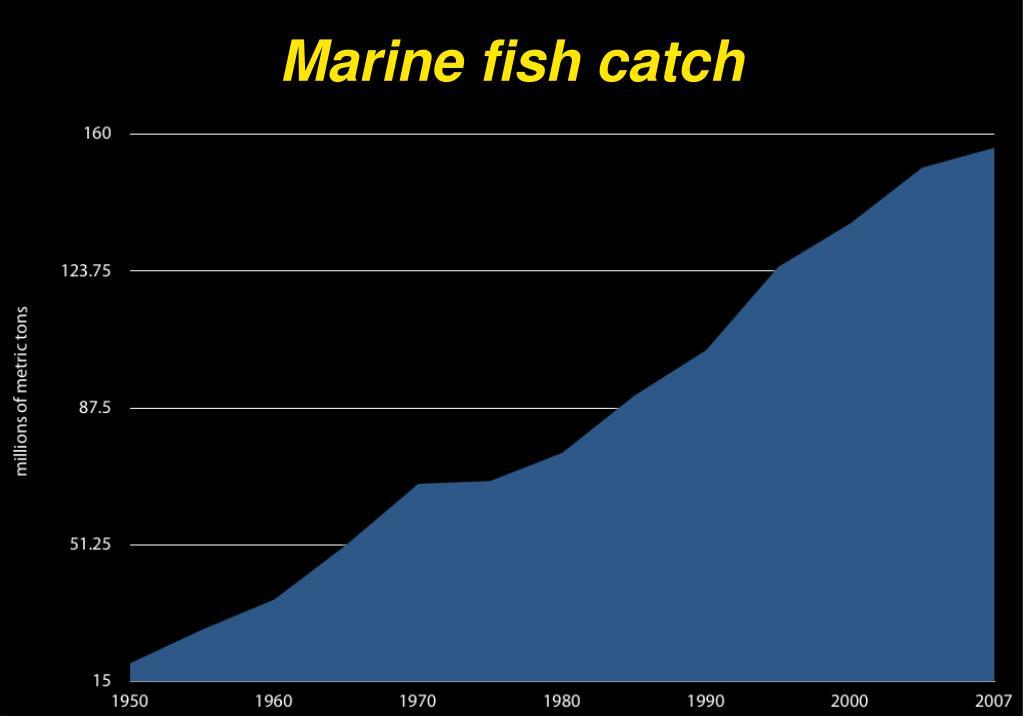 Marine fish catch