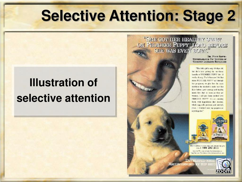 Selective Attention: Stage 2