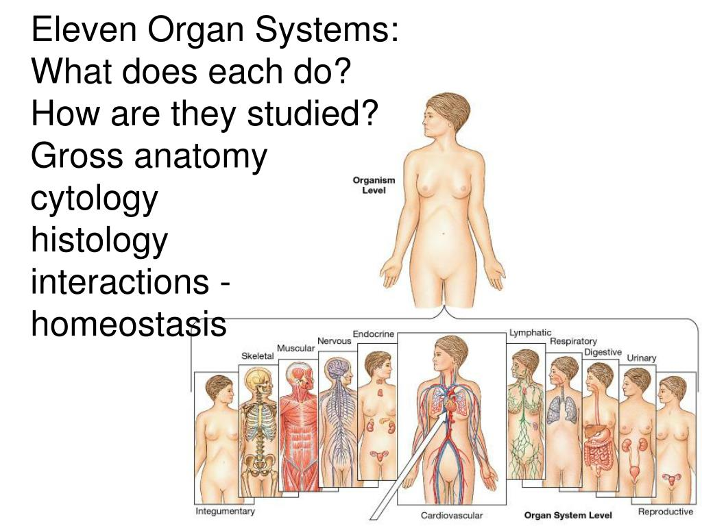 Eleven Organ Systems: