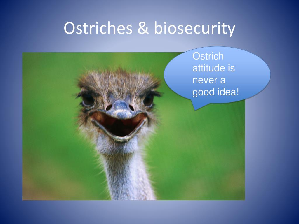 Ostriches & biosecurity