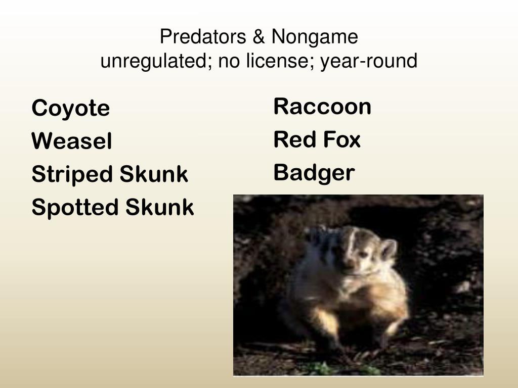 Predators & Nongame