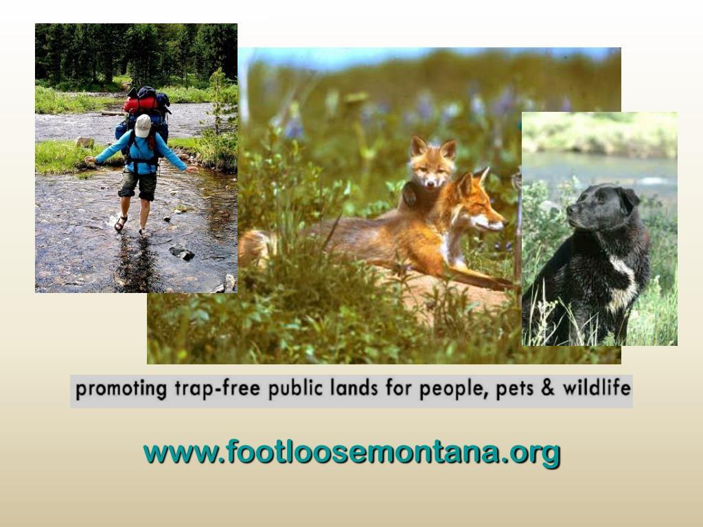 www.footloosemontana.org