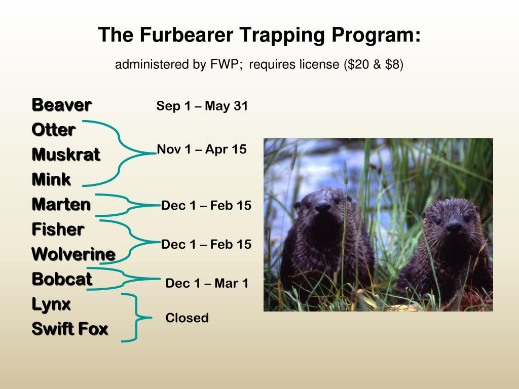 The Furbearer Trapping Program: