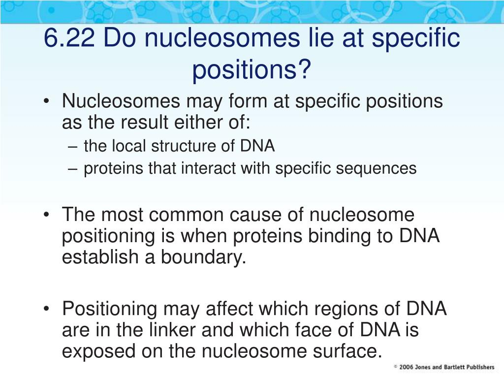 6.22 Do nucleosomes lie at specific positions?