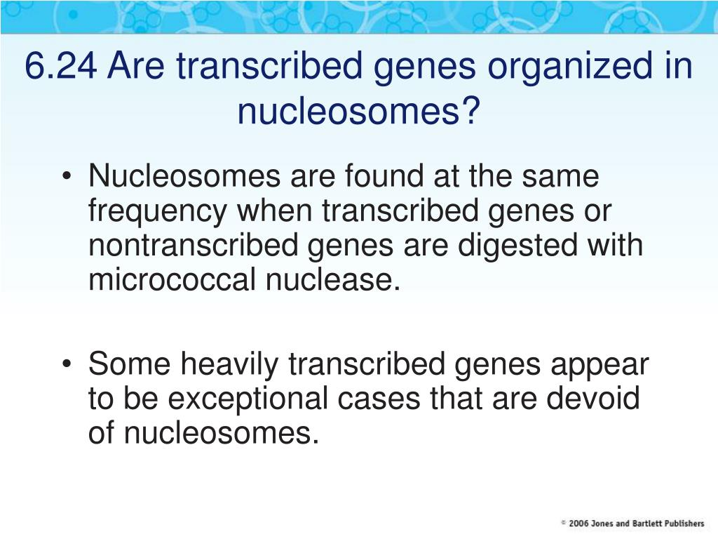 6.24 Are transcribed genes organized in nucleosomes?