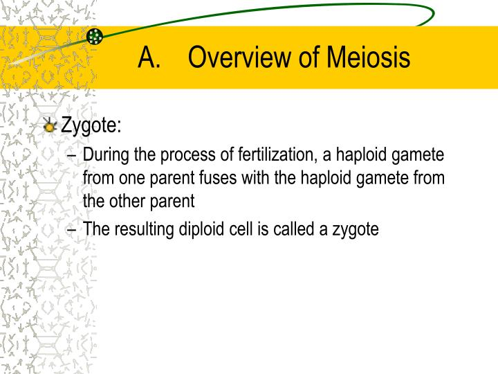 A overview of meiosis3