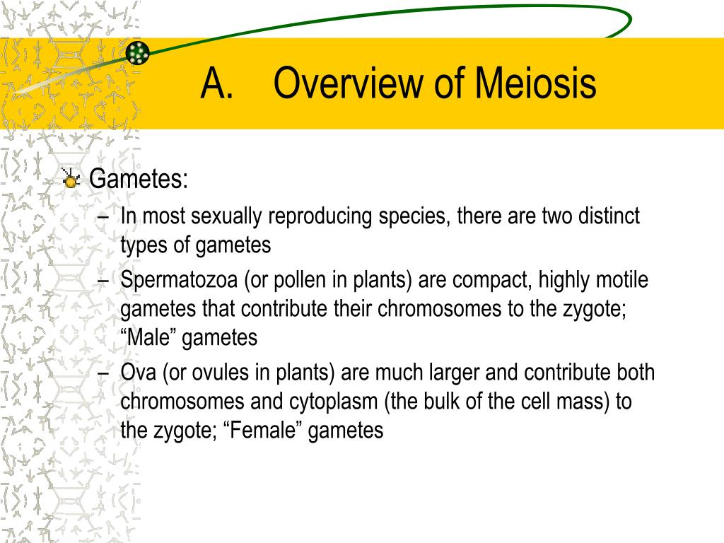 A.	Overview of Meiosis