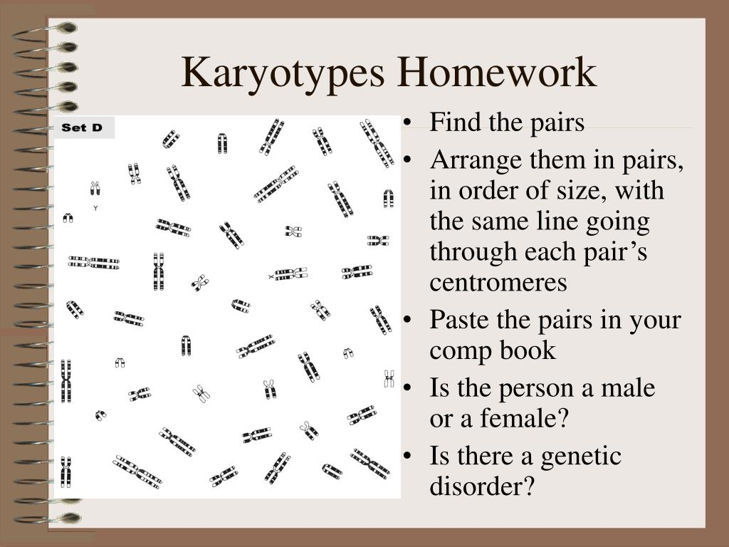 Karyotypes Homework