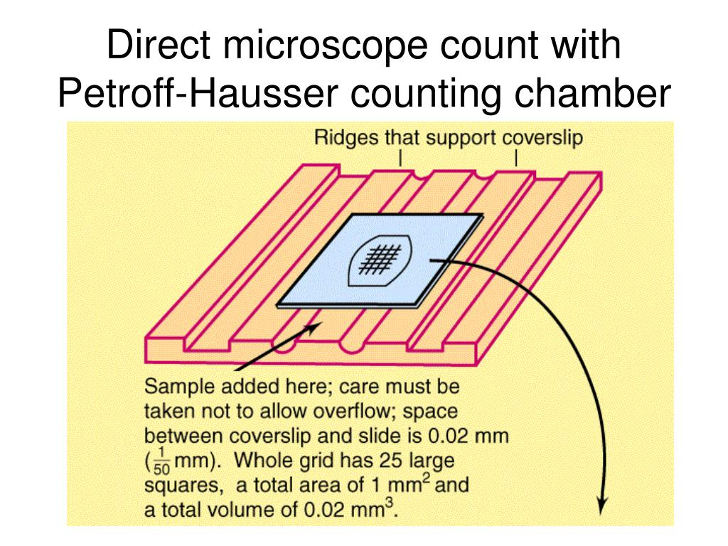 Direct microscope count with Petroff-Hausser counting chamber