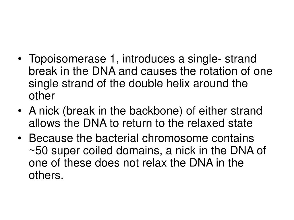 Topoisomerase 1, introduces a single- strand break in the DNA and causes the rotation of one single strand of the double helix around the other
