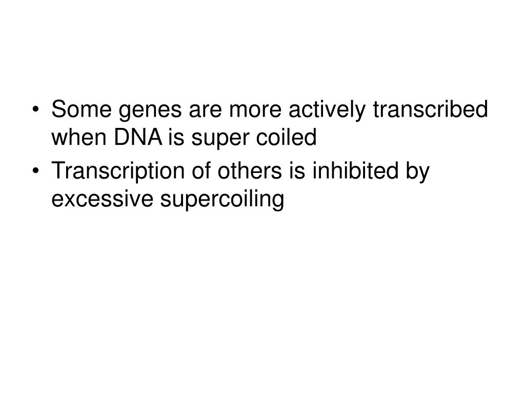 Some genes are more actively transcribed when DNA is super coiled
