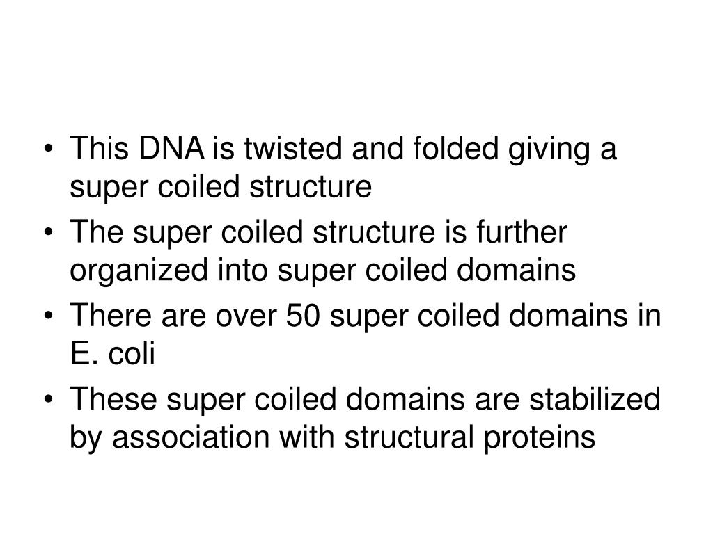 This DNA is twisted and folded giving a super coiled structure