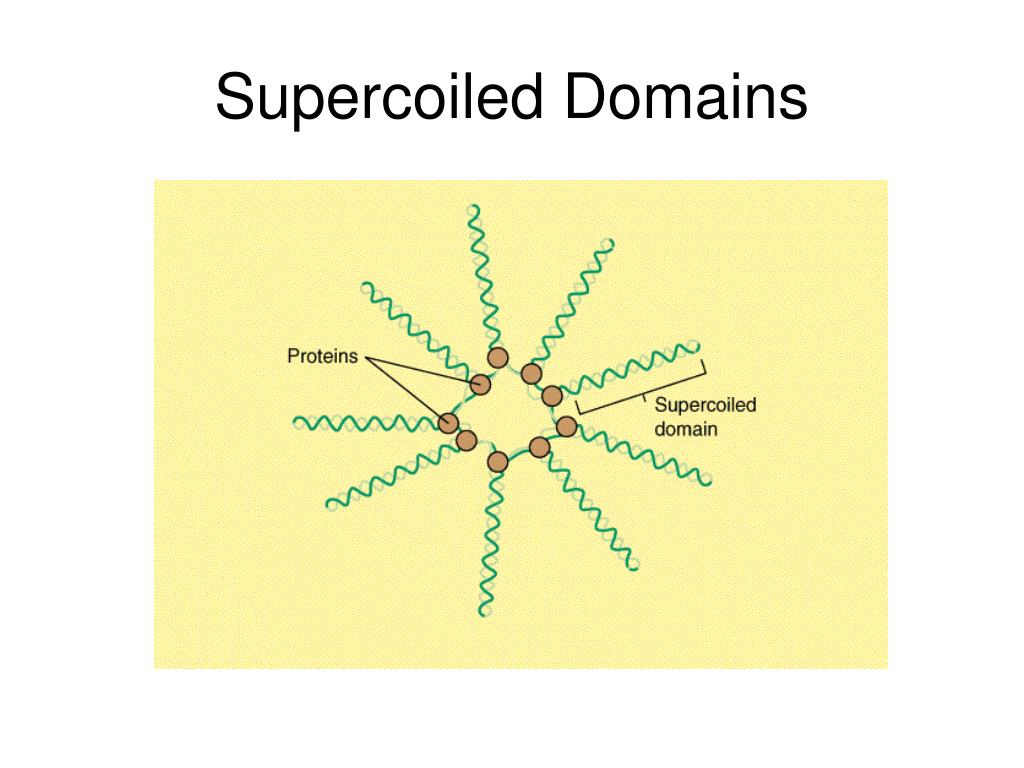 Supercoiled Domains