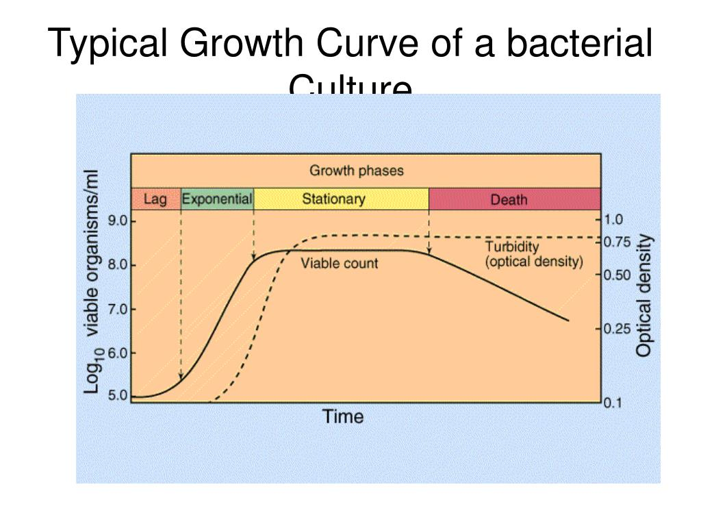 Typical Growth Curve of a bacterial Culture