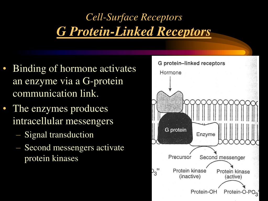 Cell-Surface Receptors