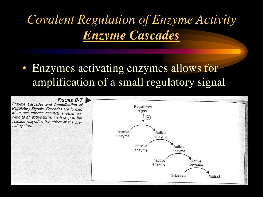 Covalent Regulation of Enzyme Activity