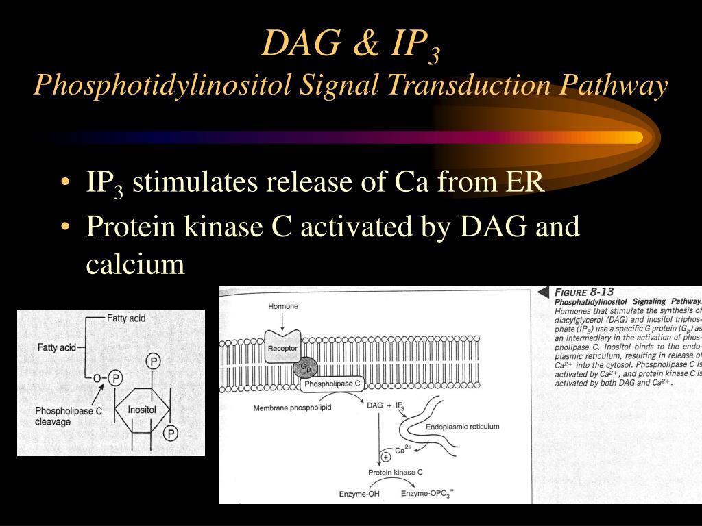 DAG & IP