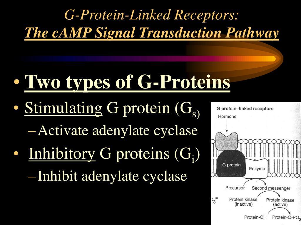 G-Protein-Linked Receptors: