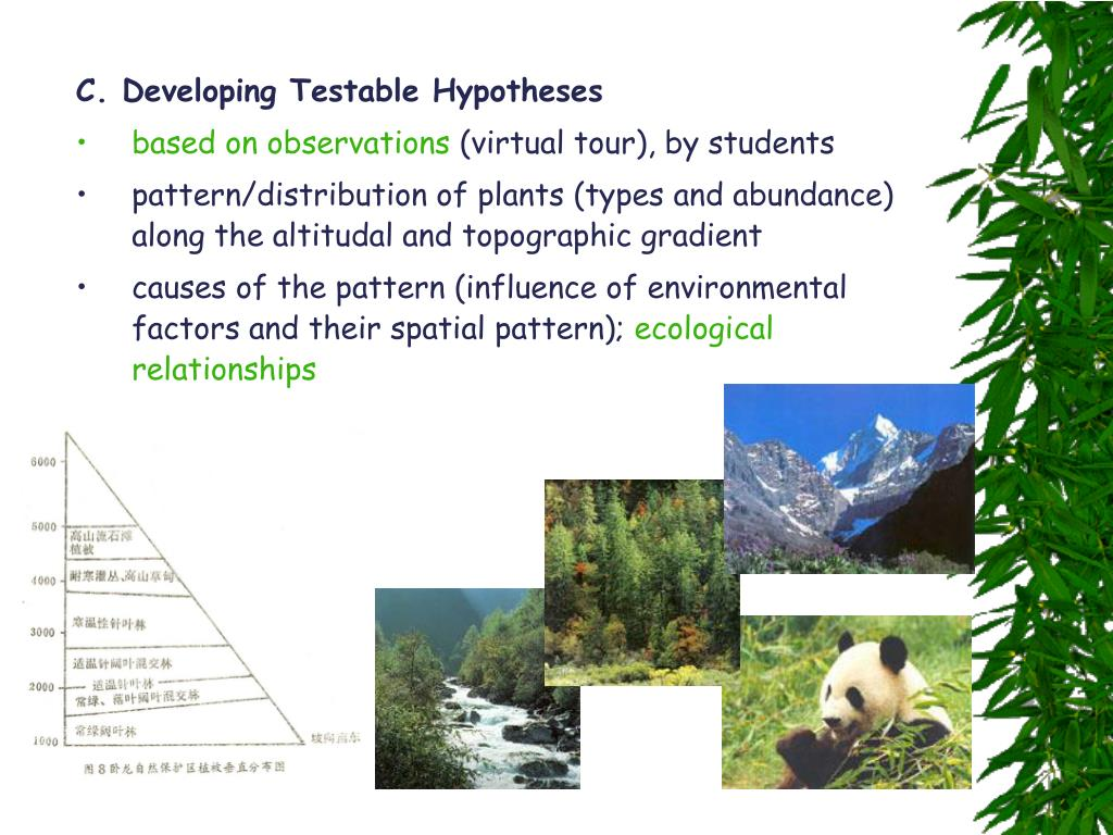 C. Developing Testable Hypotheses