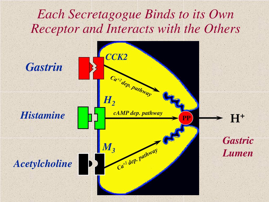 Each Secretagogue Binds to its Own Receptor and Interacts with the Others