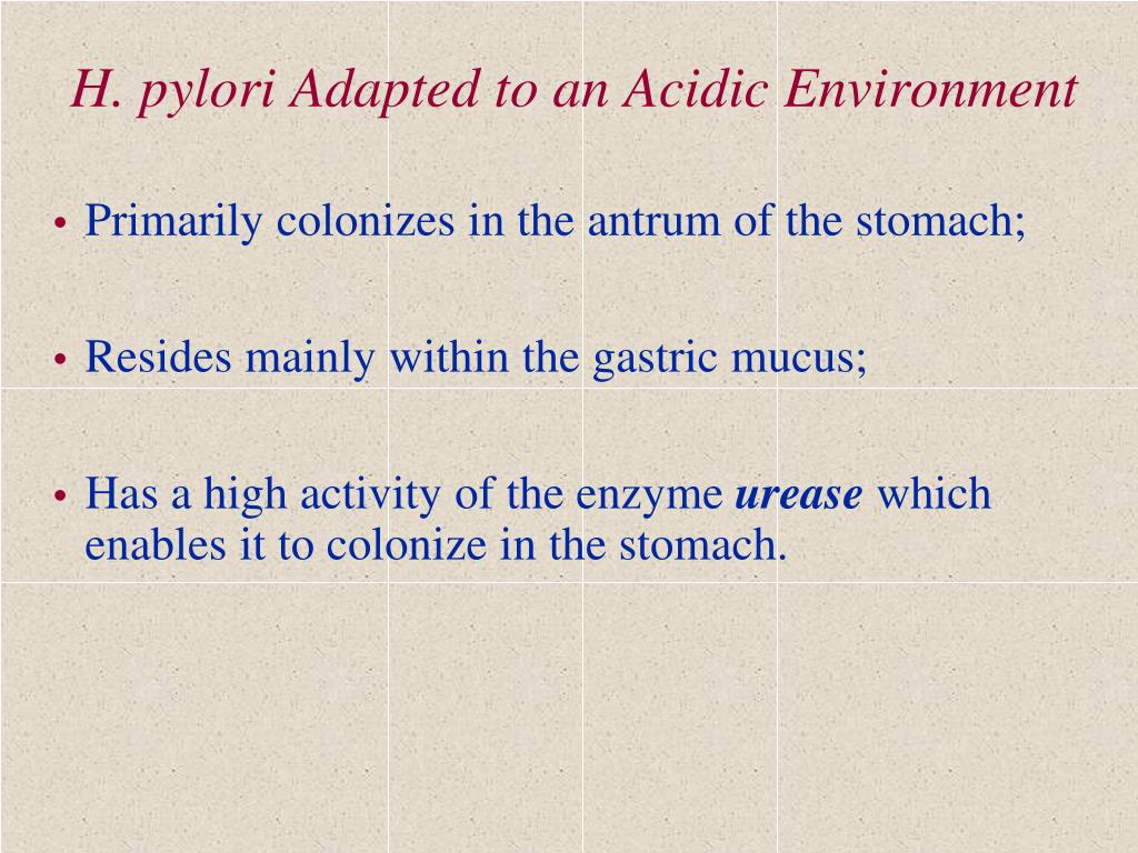 H. pylori Adapted to an Acidic Environment