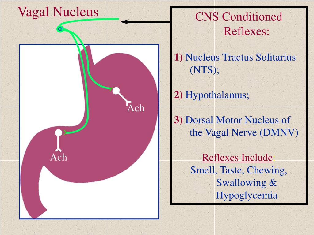 CNS Conditioned Reflexes: