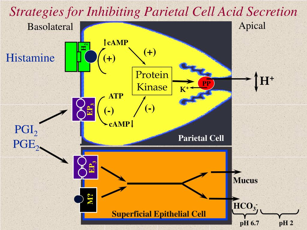 Strategies for Inhibiting Parietal Cell Acid Secretion