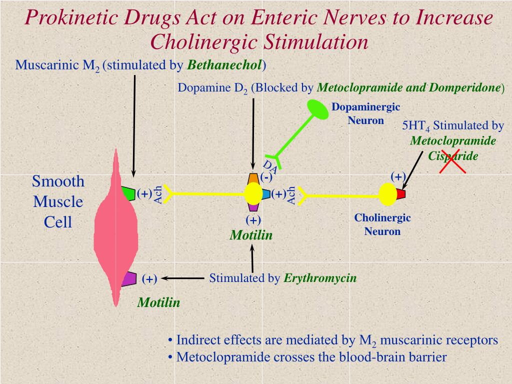 Prokinetic Drugs Act on Enteric Nerves to Increase