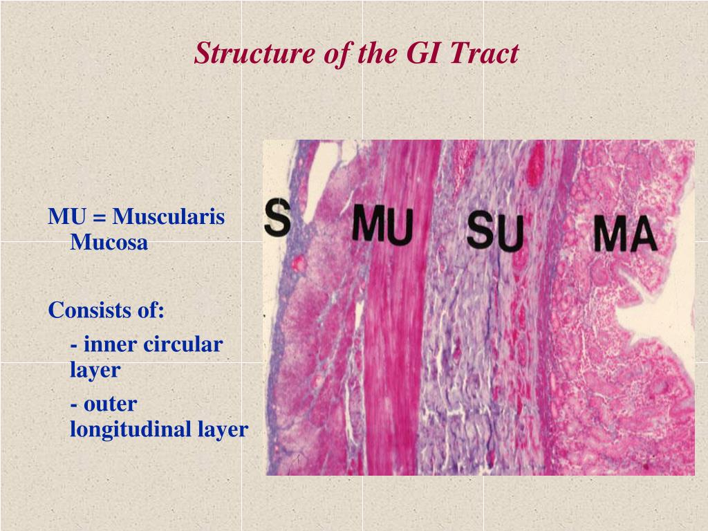 Structure of the GI Tract