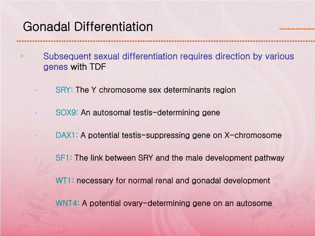 the potential sexual differentiation in the Dimorphism in the brain and the potential  to gender identity and sexual orientation, ana­  as sexual differentiation of the genitals takes.