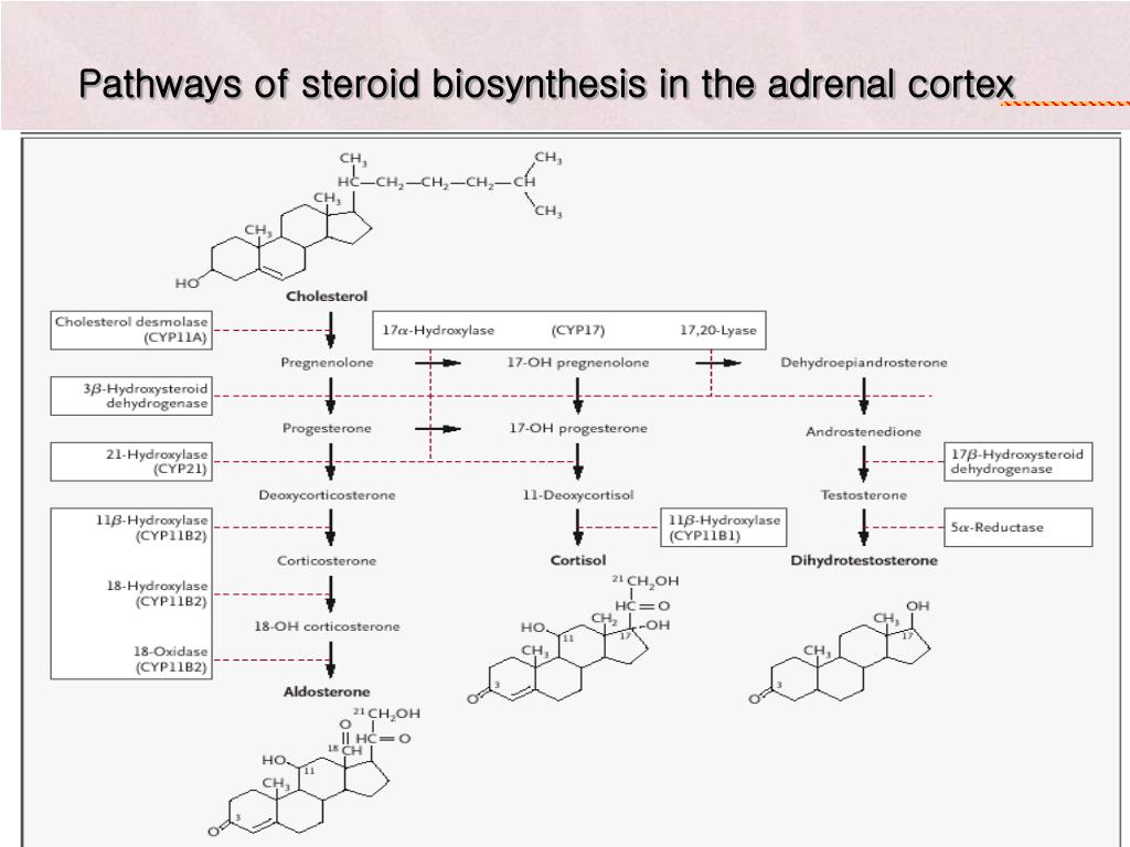steroid 21-hydroxylase deficiency genotype may not predict phenotype
