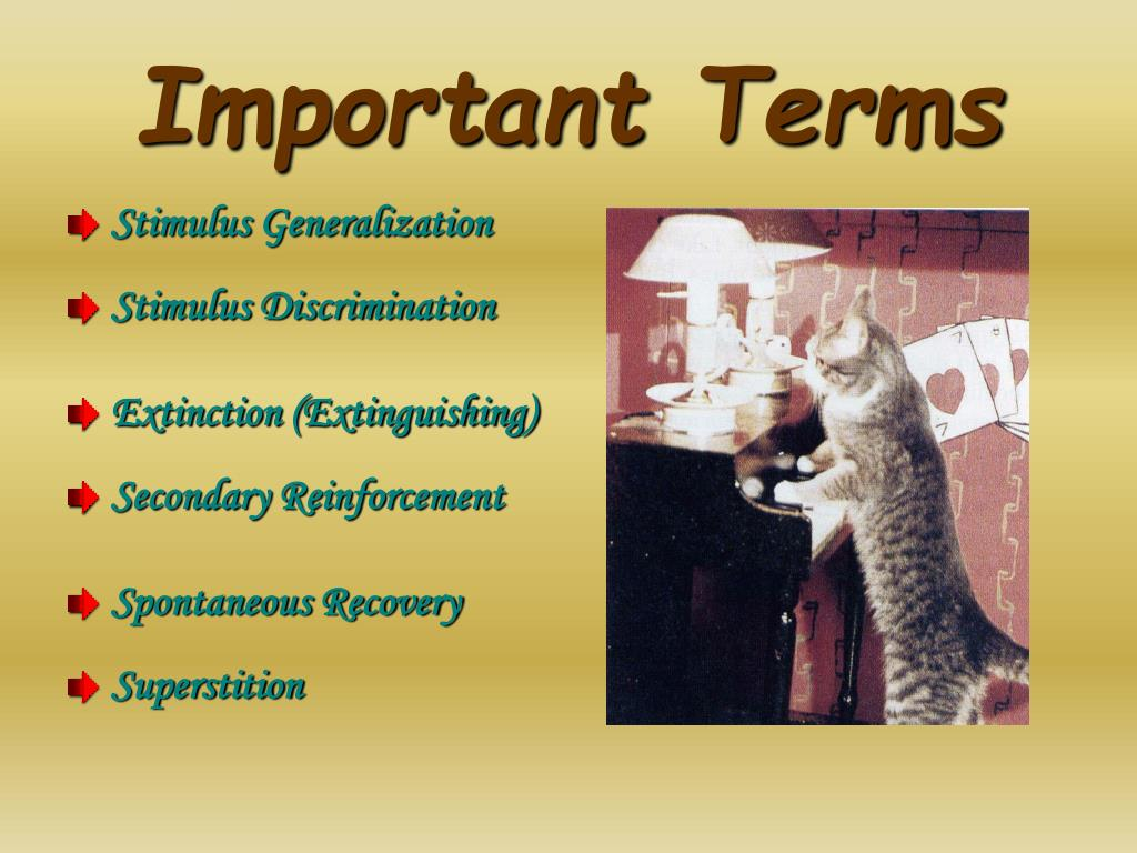 Important Terms