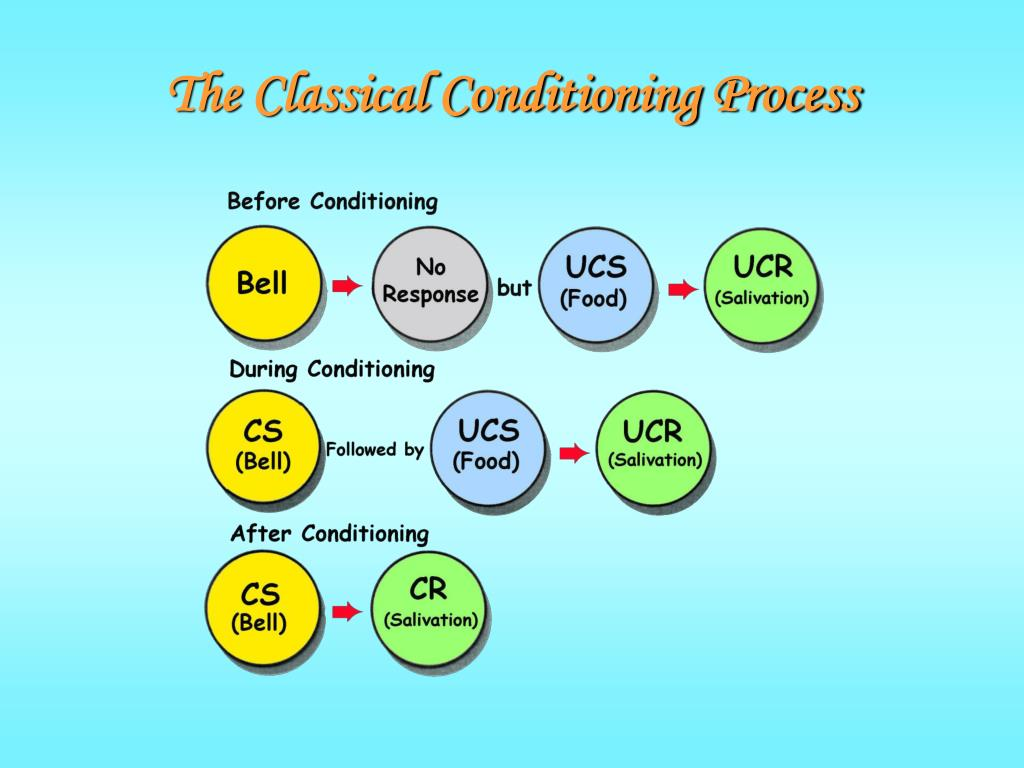 The Classical Conditioning Process