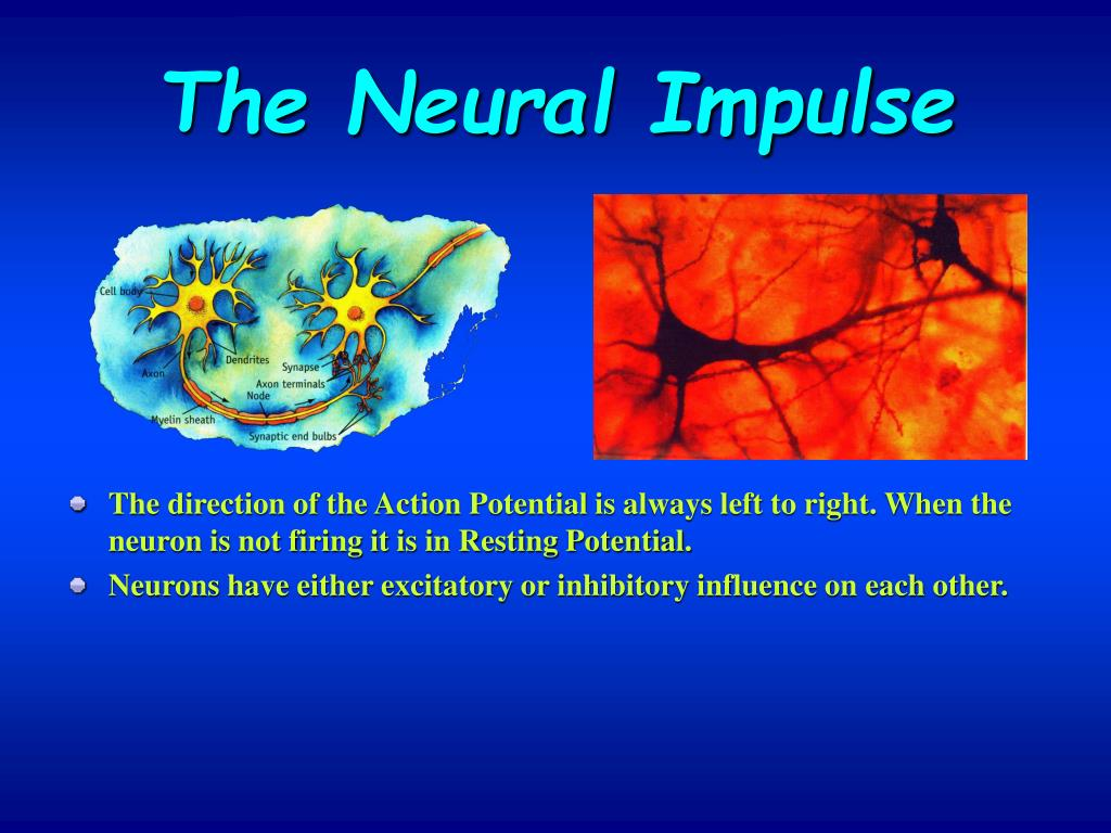 The Neural Impulse