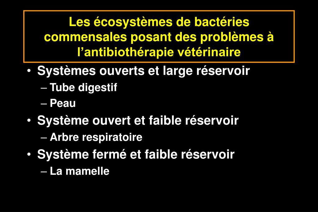 Les écosystèmes de bactéries commensales posant des problèmes à l'antibiothérapie vétérinaire