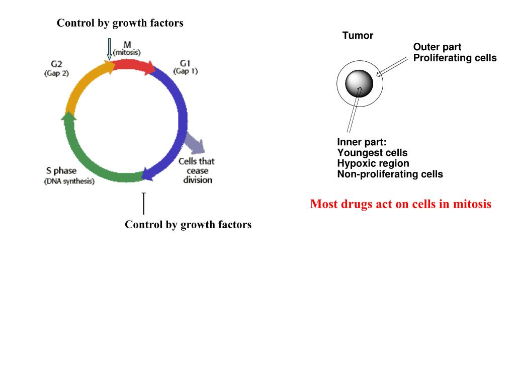 Control by growth factors