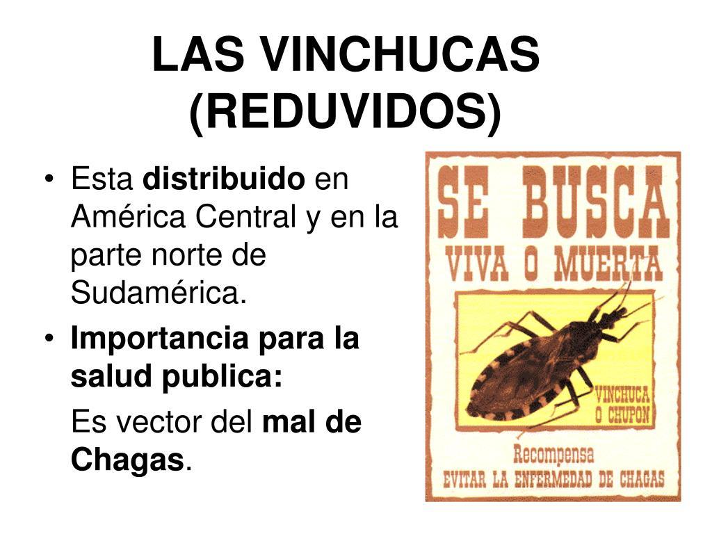 LAS VINCHUCAS